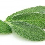 Improve cognitive function with the benefits of sage