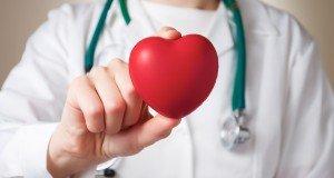 doctor holds heart