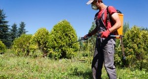 man sprays pesticides