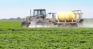 spraying glyphosate
