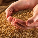 gluten-wheat