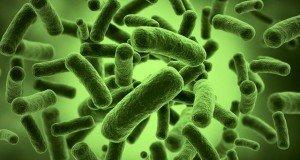 gut-bacteria
