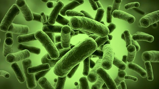 How Gut Bacteria Can Control Your Mood And Food Choices