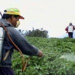 herbicide-spraying