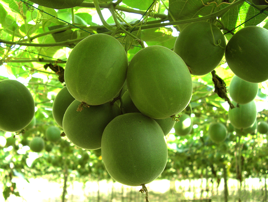 fruits healthy skin monk fruit sweetener