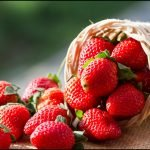 Strawberries contaminated with pesticides and grown with poisonous gases