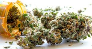 medical-cannabis