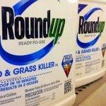 Roundup-weed-killer