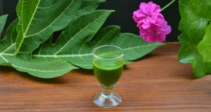 papaya-leaf-juice