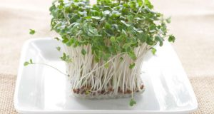 lower-blood-sugar-broccoli-sprouts