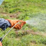 Roundup-toxicity