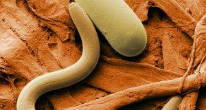 parasites-relief