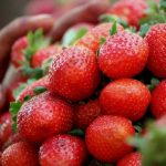 gene-editing-fruits