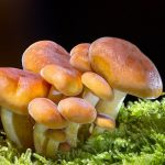 New findings show mushrooms protect brain health