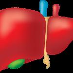 zinc-liver-disease