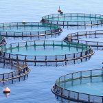 fish-farms