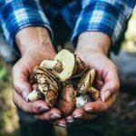 mushroom-health-benefits