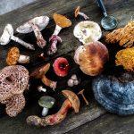 mushrooms-sustainable-superfoods